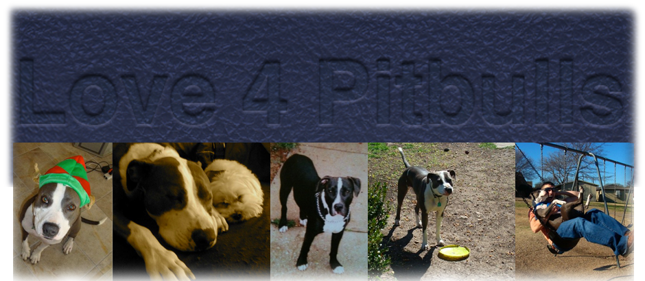 Pitbull Love Logo